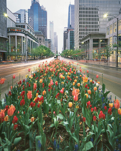 chicago_image3